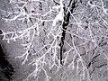 Snow - panoramio - Modris Putns.jpg