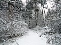 Snowy path - Flickr - Stiller Beobachter.jpg