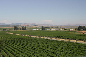 Vineyards in the California wine region of Son...