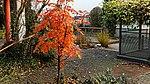 Sorbus Herbstlaub 09.jpg
