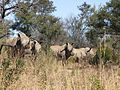 South Africa-Mpumalanga-Rhino01.jpg