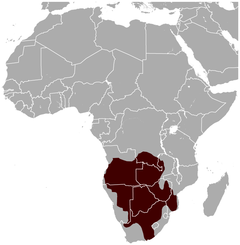 South African springhare Pedetes capensis distribution map.png