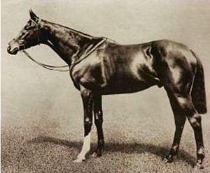 Spearmint (horse) - Image: Spearmint