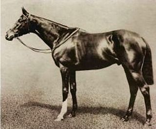 Spearmint (horse) British-bred Thoroughbred racehorse