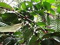 Spice & Herbal Garden - Palapathwela, Sri Lanka 26.JPG