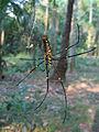 Spider variety.jpg