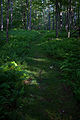 Spring-hiking-trail-wv - West Virginia - ForestWander.jpg