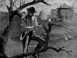 A black and white woodcut of a a man grafting a twig onto a tree branch, with a farm in the background.