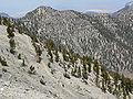 Spring Mountains North Loop trail 8.jpg