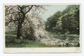 Spring in the Berkshire Hills, Berkshire Hills, Mass (NYPL b12647398-69385).tiff