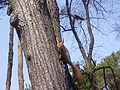 Squirrel-in-the-park-of-KPI.jpg