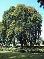 Srinagar - Shalimar Gardens 43.JPG