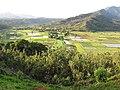 Starr-130320-3223-Hibiscus tiliaceus-habit view loi-Hanalei Kilauea Pt NWR-Kauai (24582093913).jpg