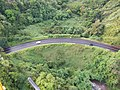 Starr-141014-2183-Caesalpinia decapetala-aerial view-Kakipi Gulch Haiku-Maui (24616549504).jpg
