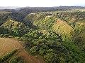 Starr-141014-2226-Caesalpinia decapetala-aerial view-Kakipi Gulch Haiku-Maui (25247275835).jpg