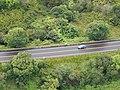 Starr-141014-2254-Caesalpinia decapetala-aerial view Hana Hwy-Kakipi Gulch Haiku-Maui (24616683914).jpg