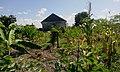 Started farming ready for Tanzania ya Viwanda 02.jpg