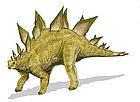 Stegosaurus stenops