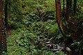 Stream in Glenarm forest - geograph.org.uk - 248547.jpg