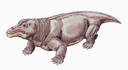 Struthiocephalus