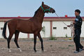 Studfarm in Turkmenistan - Flickr - Kerri-Jo (115).jpg