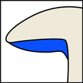 Subdecurrent gills icon2.png