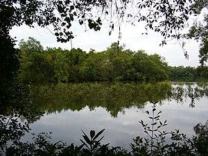 A wetland in the Sungei Buloh Wetland Reserve, in Singapore