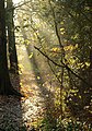 Sunlight, Cannon Hill Common - geograph.org.uk - 2170578.jpg