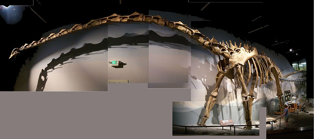 Die Supersaurus 1024px-Supersaurus_moal
