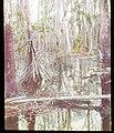 Swamp and tree trunk (3608378924).jpg