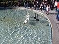 Swan Lake, Yerevan 09.jpg