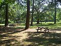 Tallahassee FL Lake Jackson Mounds SP picnic01.jpg