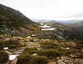 Tarn Shelf Mt Field National Park.jpg