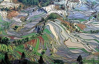 Yuanyang County, Yunnan - Abstract pattern of terraced rice fields in Yuanyang County