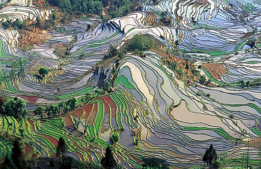 Terrace field yunnan china denoised