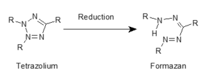 """Formazan - Reduction of a tetrazolium to a formazan. The """"Rs"""" stand-in for various organic groups that define the various tetrazolium salts and provide their unique chemical characteristics."""
