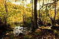 Teufelssee mit jungen Buchen am Ufer (1).jpg
