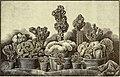 The American garden (1890) (17528628773).jpg