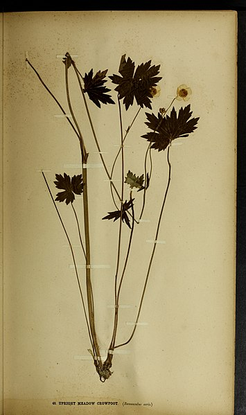 File:The British farmer's plant portfolio - specimens of the principal British grasses, forage plants and weeds - with full descriptions (1896) (14800052563).jpg