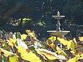 The Royal Botanical Garden of Sydney.JPG