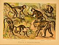 The animal kingdom (Plate II) (6130242152).jpg