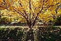The golden fall.jpg