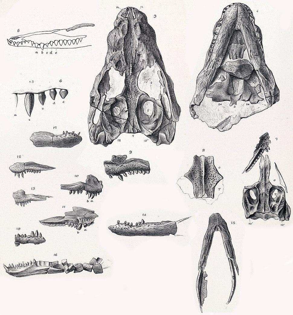 Theriosuchus pusillus