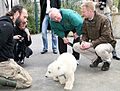 Thomas Dörflein + William Timken + Knut (polar bear) Berlin Zoo Germany.jpg