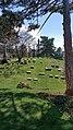 Toward the obelisks - Lake View Cemetery (32462353035).jpg