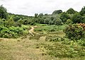 Towards Gorley Bushes, Fritham - geograph.org.uk - 1407438.jpg