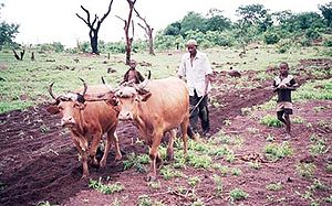 Traditional farming Guinea.jpg