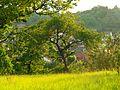 Tree - panoramio (13).jpg