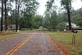 Tree and power line over Alden Road after Hurricane Irma, Valdosta, Georgia.jpg
