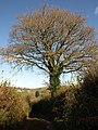 Tree by the track - geograph.org.uk - 1061799.jpg